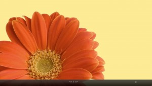 FullScreen Flower 300x171 Gallery Options